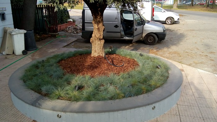 albero rotonda